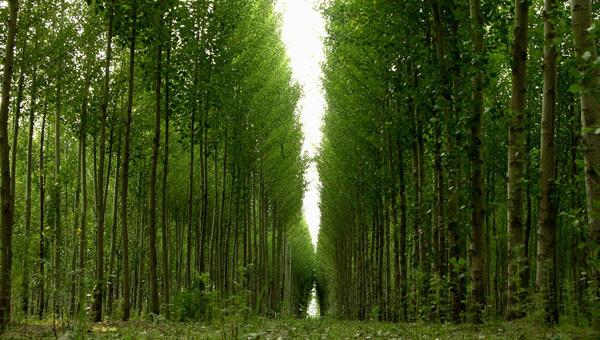 储备林图片.jpg